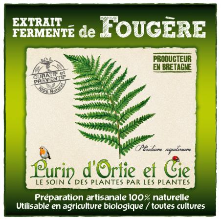 Extrait Fermenté de Fougère : Curatif et Préventif