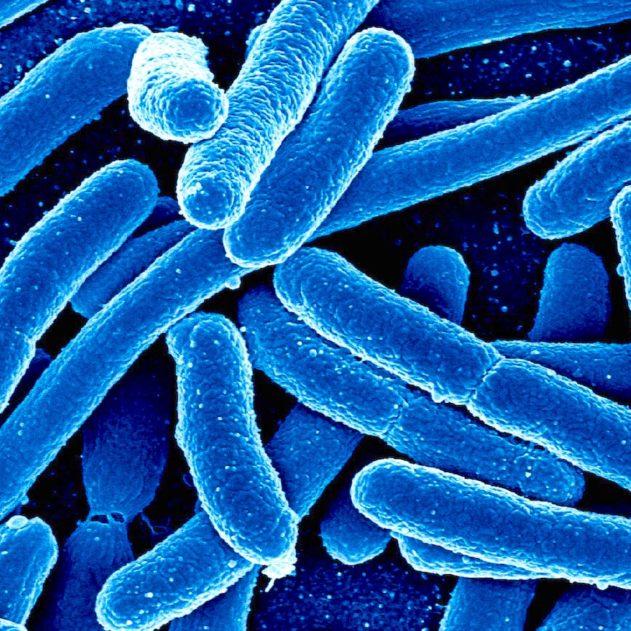 bactéries photosynthétiques